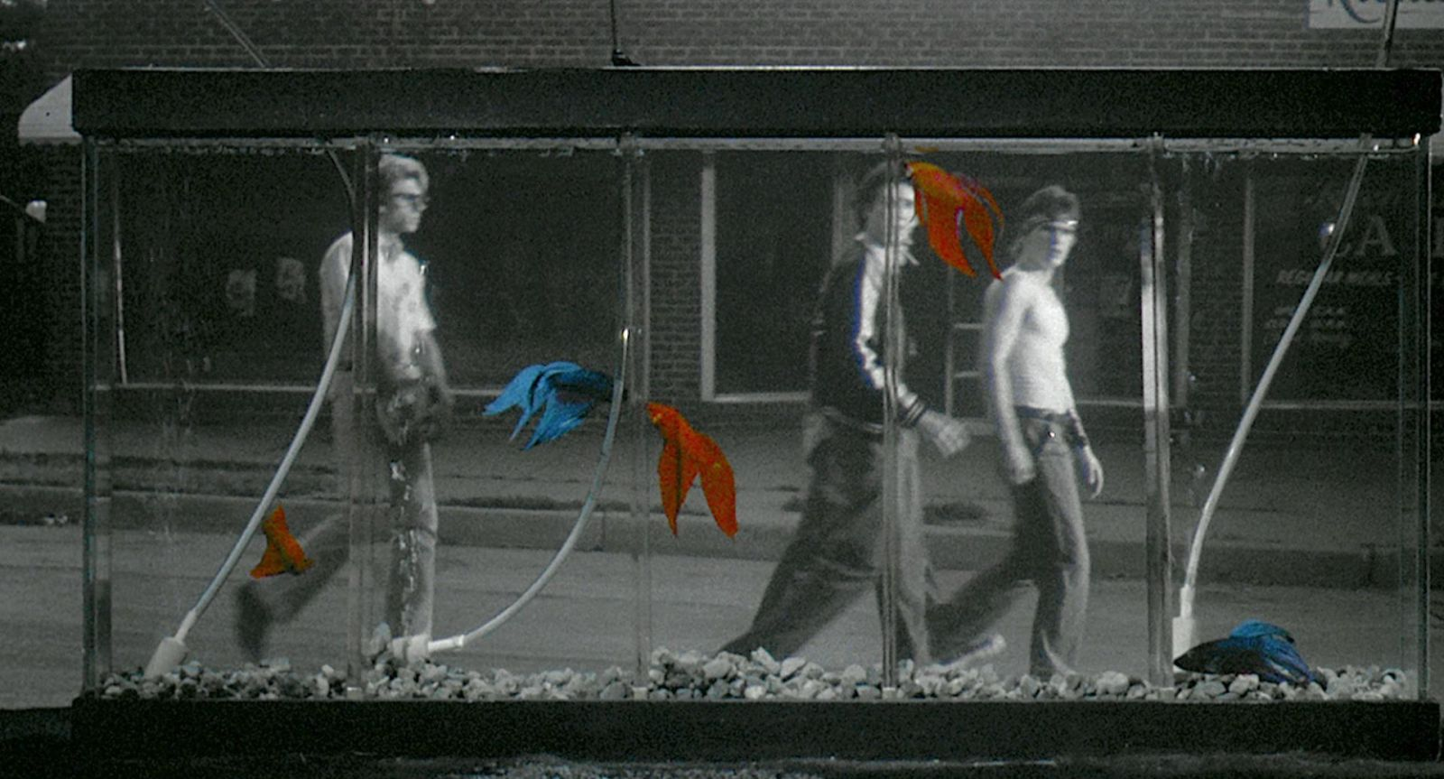 my personal favorite film rumble fish my ode to coppola s whenever i am asked what my favorite movie is i declare from the gut out hesitation 1983 s rumble fish by francis ford coppola starring matt