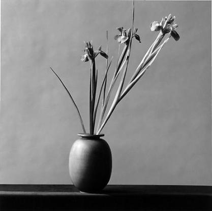 mapplethorpe-9-USE-THIS-ONE72-104x104